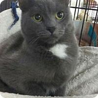 Adopt A Pet :: Bengi - Trevose, PA