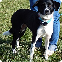 Adopt A Pet :: Oona(35 lb) AWESOME PET! - SUSSEX, NJ