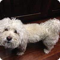 Adopt A Pet :: Sammy - Boise, ID