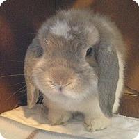 Adopt A Pet :: Colton - Watauga, TX