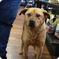 Adopt A Pet :: Buster - Manassas, VA