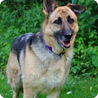 Adopt A Pet :: Lady - Chester Springs, PA