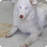 Adopt A Pet :: Stevie - Brooklyn, NY
