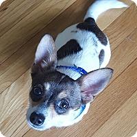 Adopt A Pet :: JB - Worcester, MA