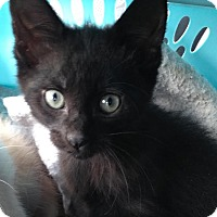 Adopt A Pet :: Jack - East Brunswick, NJ