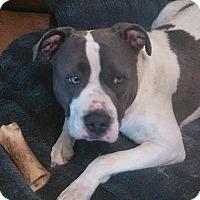 Adopt A Pet :: Brutus - Modesto, CA
