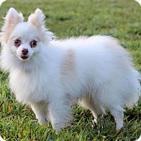 Adopt A Pet :: Corolla - Waldorf, MD