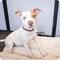 Adopt A Pet :: Holly - Atlanta, GA