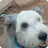 Adopt A Pet :: **NOAH - Peralta, NM