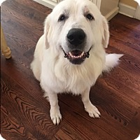 Adopt A Pet :: Titan - Bedford Hills, NY