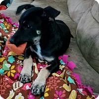 Adopt A Pet :: Lucy - Ellaville, GA