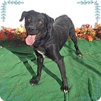 Adopt A Pet :: COOPER see also JACKSON - Marietta, GA