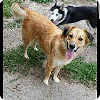 Adopt A Pet :: Daisy - Goldsboro, NC