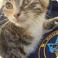 Adopt A Pet :: Riley - Spring, TX