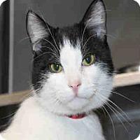 Adopt A Pet :: PRINCE - Chicago Ridge, IL