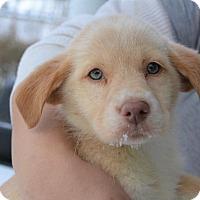 Adopt A Pet :: Sunshine - Danbury, CT