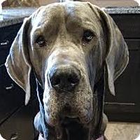 Adopt A Pet :: Merrick - Silver Spring, MD