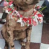 Adopt A Pet :: Booker - Phoenix, AZ