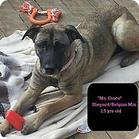 Adopt A Pet :: GRACE - MAIDEN, NC