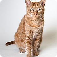 Adopt A Pet :: Marmelade - Rockaway, NJ