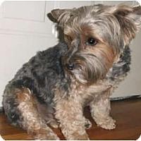 Adopt A Pet :: Daisy - Mooy, AL