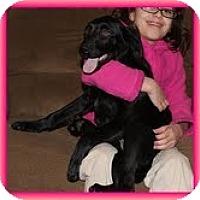 Adopt A Pet :: Spice Girl - Staunton, VA