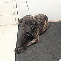 Adopt A Pet :: Tigger - Lancaster, VA