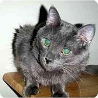 Adopt A Pet :: Dante - Hamilton, ON