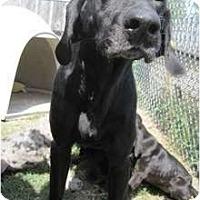 Adopt A Pet :: Lucille - Richmond, VA