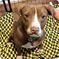Adopt A Pet :: Maple - Clarksburg, MD