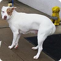 Adopt A Pet :: Winnie - Bardonia, NY