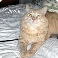 Adopt A Pet :: Clyde - Ocean City, NJ