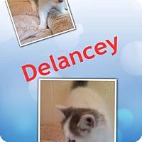Adopt A Pet :: Delancey - McDonough, GA