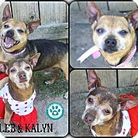 Adopt A Pet :: Kaleb and Kalyn - Kimberton, PA