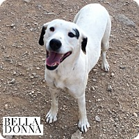 Adopt A Pet :: Bella Donna - Acton, CA