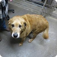 Adopt A Pet :: Bob - Geneseo, IL