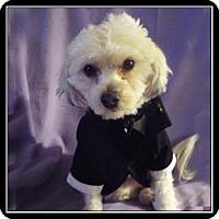 Adopt A Pet :: Louey - San Dimas, CA