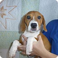 Adopt A Pet :: Maybel - Oviedo, FL