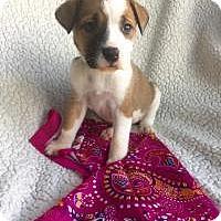 Adopt A Pet :: Sunshine - Newark, DE