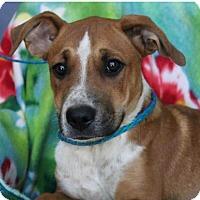 Adopt A Pet :: CREEK - Red Bluff, CA