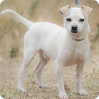 Adopt A Pet :: EMMET - BELL GARDENS, CA