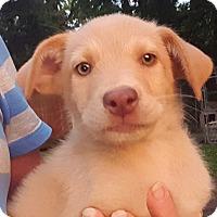 Adopt A Pet :: Cooper~ meet me! - Glastonbury, CT