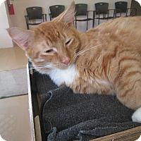 Adopt A Pet :: Crush - Gadsden, AL