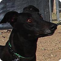 Adopt A Pet :: Paisley - Tucson, AZ