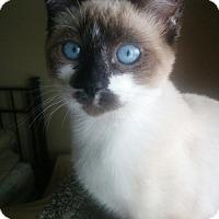 Adopt A Pet :: LuLu - South Saint Paul, MN