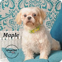 Adopt A Pet :: Maple - Topeka, KS