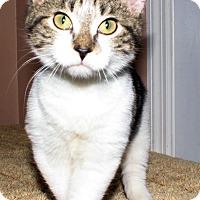 Adopt A Pet :: Tinker - Morganton, NC