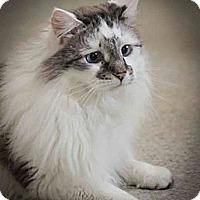Adopt A Pet :: Jules - Davis, CA