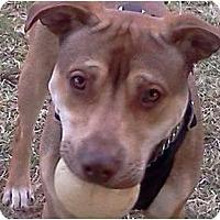 Adopt A Pet :: Rocky - Brodheadsville, PA
