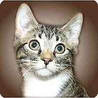 Adopt A Pet :: Decker - Montgomery, IL